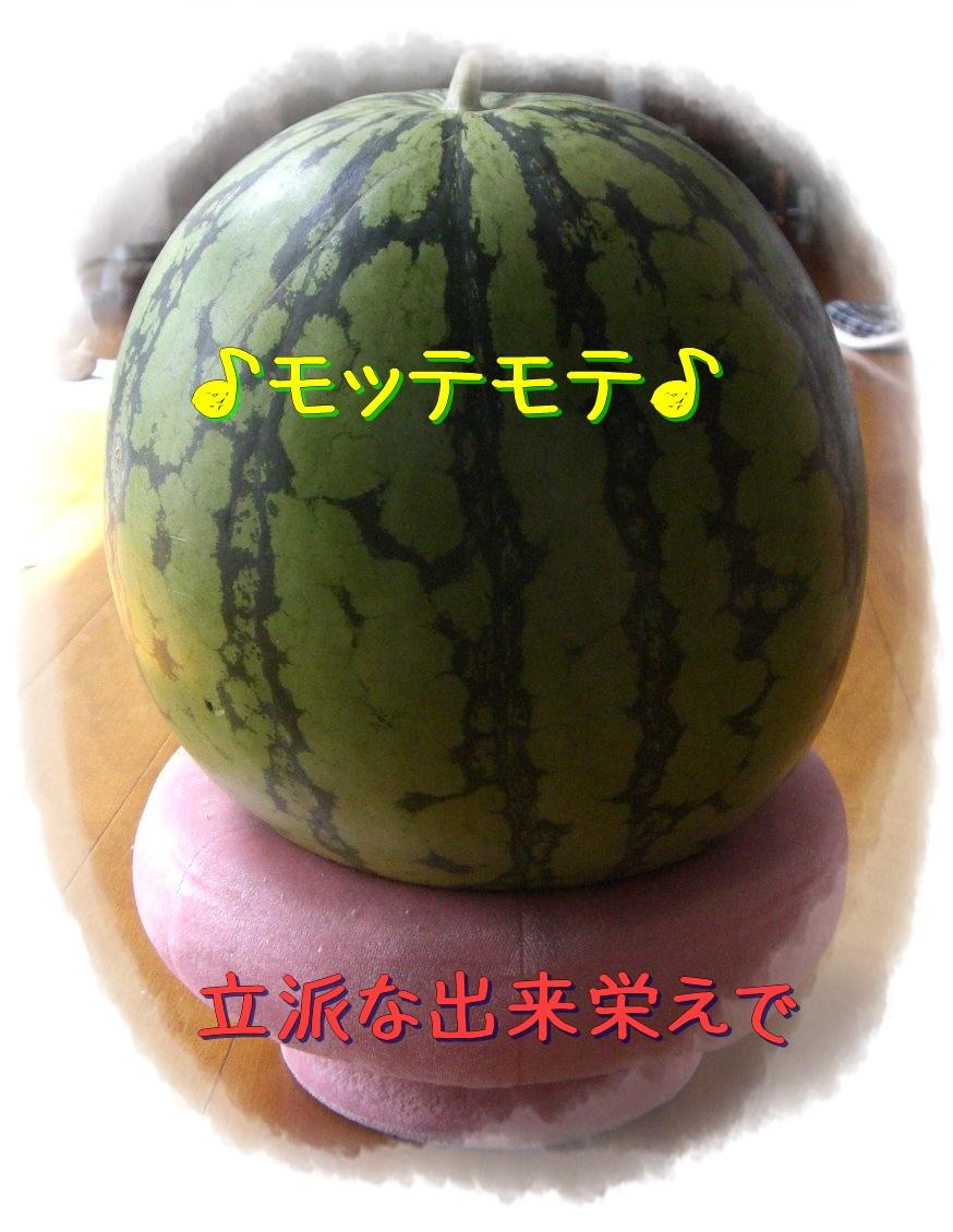a0104890_2034548.jpg