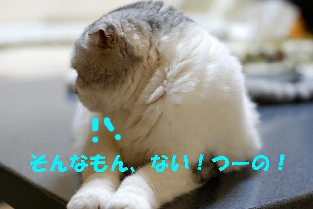 c0116921_17412361.jpg