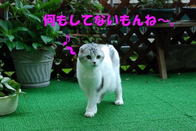 c0116921_18222087.jpg