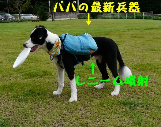 a0100564_19434045.jpg