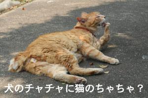 c0166018_0414144.jpg