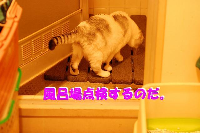 c0116921_011084.jpg