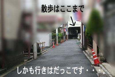c0166018_1124019.jpg