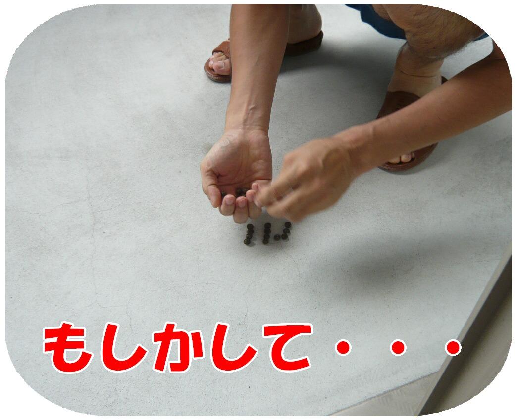 c0151439_8124561.jpg