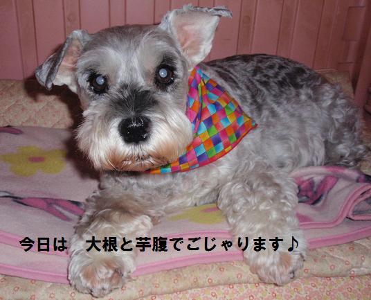 c0098501_2011775.jpg