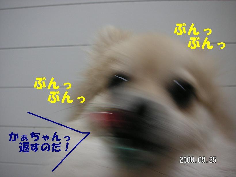 c0179136_191987.jpg
