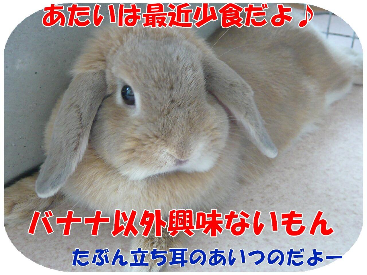 c0151439_8191475.jpg