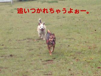 c0086746_2025296.jpg