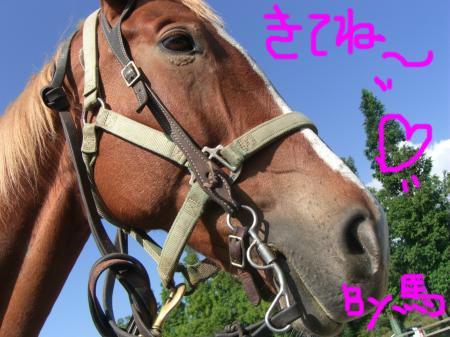 c0023323_76534.jpg