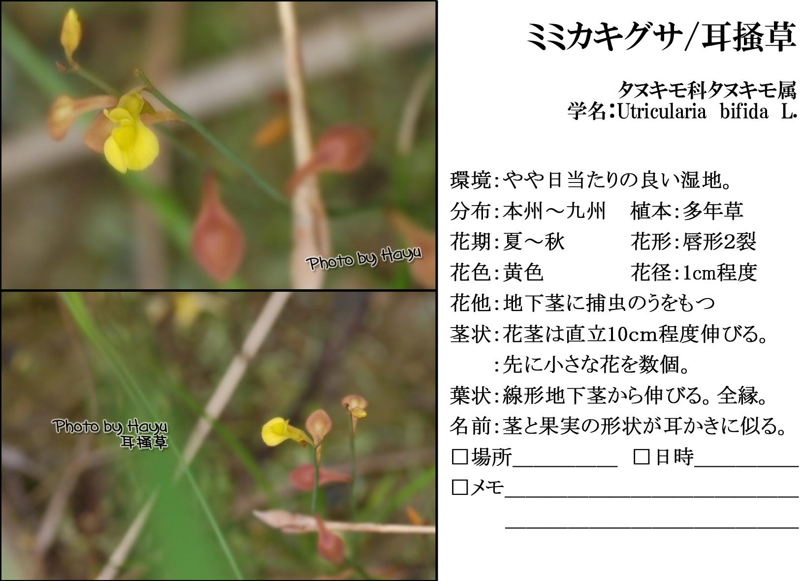 a0059328_1502219.jpg