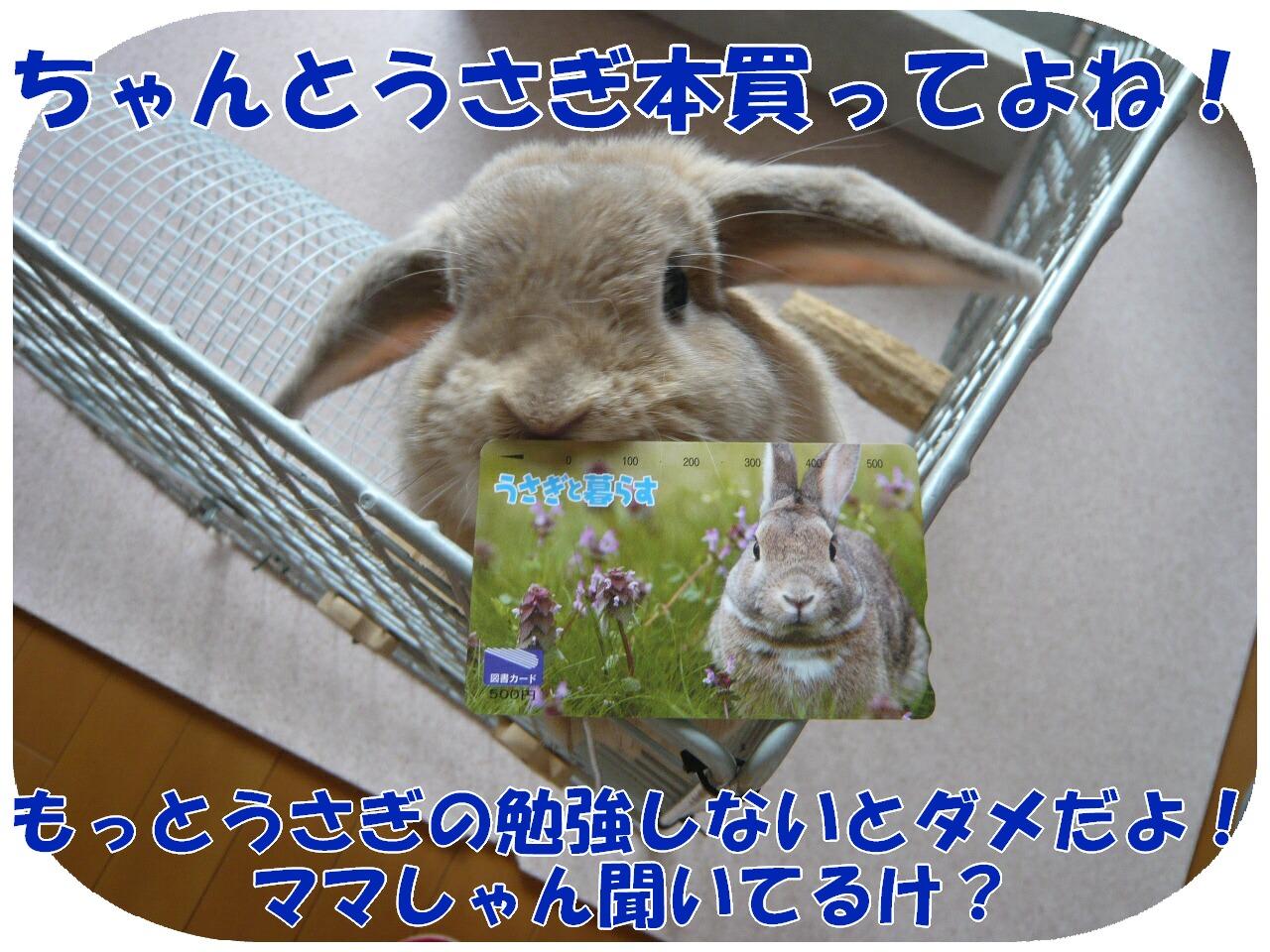 c0151439_22153439.jpg