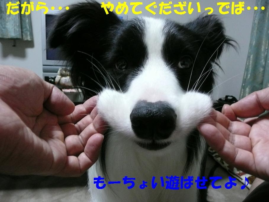 c0147241_21392241.jpg