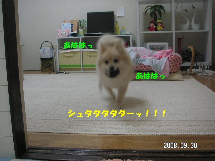 c0179136_22331351.jpg