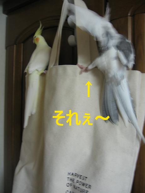 e0027078_16142553.jpg
