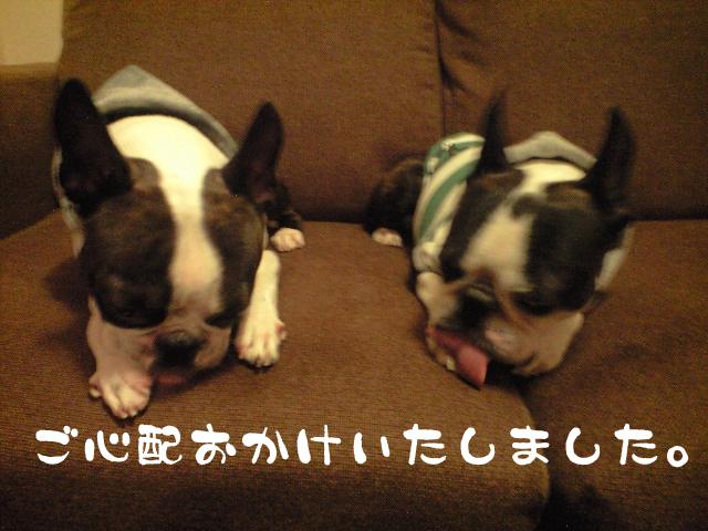 c0122897_2011151.jpg