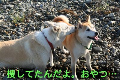 c0166018_1449366.jpg