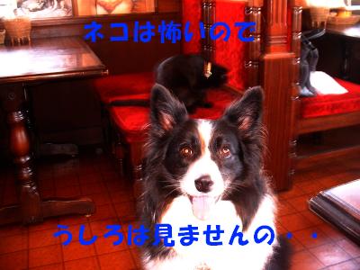 c0120585_2051081.jpg
