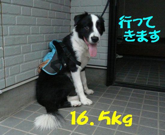 a0100564_18371073.jpg