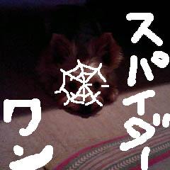 c0036617_19371570.jpg