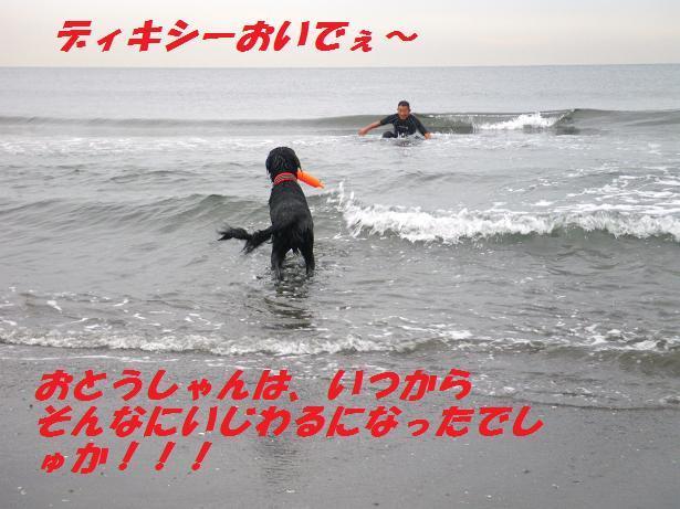 a0104464_1143364.jpg