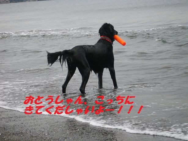 a0104464_11441612.jpg