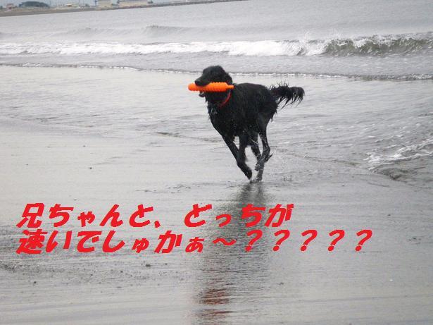 a0104464_11473533.jpg
