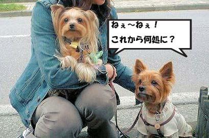 c0033145_925926.jpg