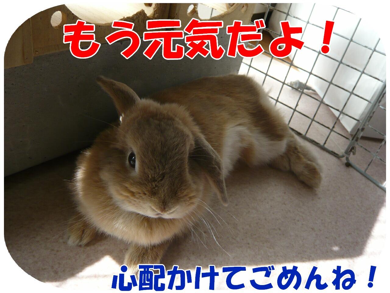 c0151439_864971.jpg