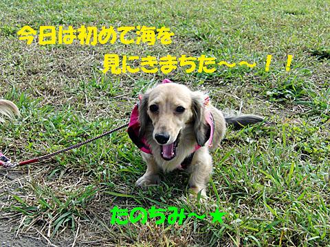 c0108112_0445547.jpg