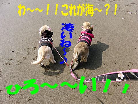 c0108112_0453861.jpg