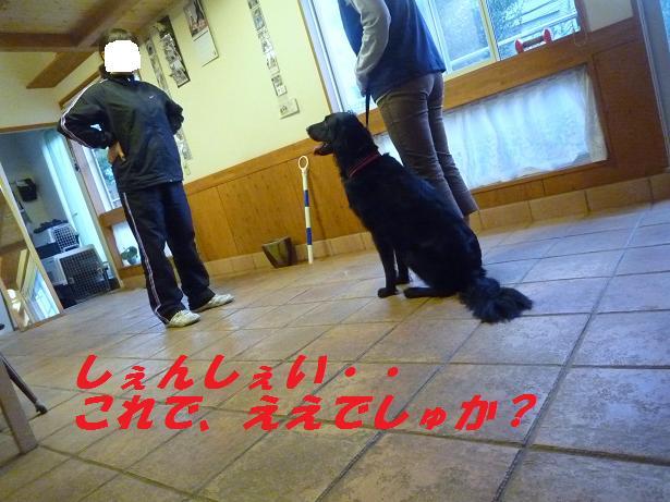 a0104464_1155984.jpg