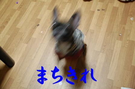c0130324_22433077.jpg