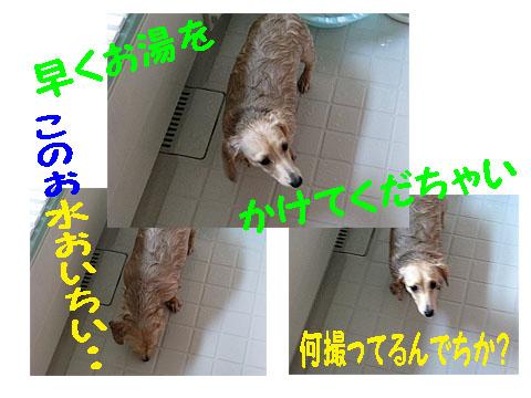 c0108112_848361.jpg