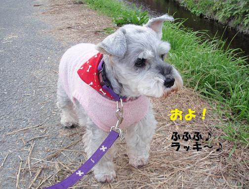 c0098501_20121185.jpg