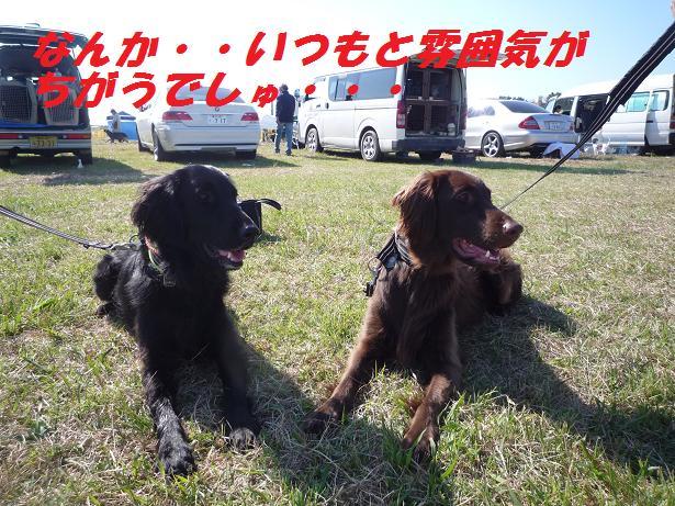 a0104464_1461812.jpg