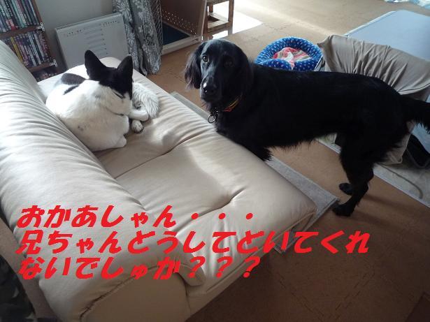 a0104464_1149458.jpg
