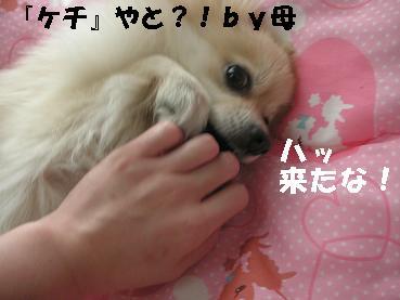 c0179136_2014283.jpg