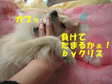 c0179136_2015223.jpg