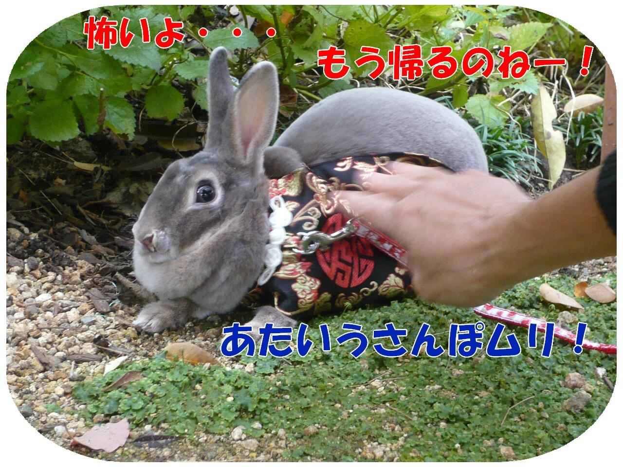 c0151439_11452722.jpg
