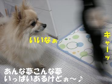 c0179136_234342.jpg