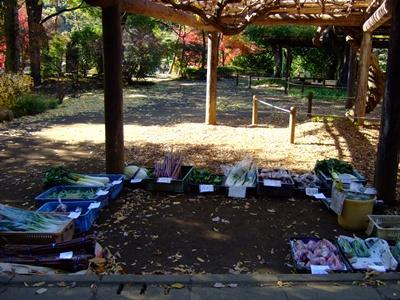 薬師池公園の野菜