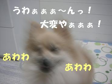 c0179136_23291852.jpg
