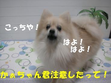 c0179136_23293330.jpg