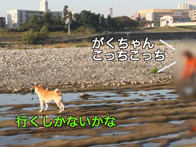 c0166018_1524171.jpg