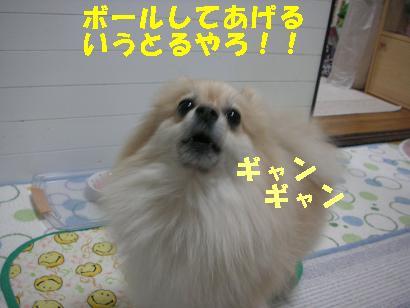c0179136_523520.jpg