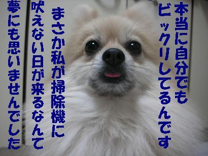 c0179136_3125627.jpg