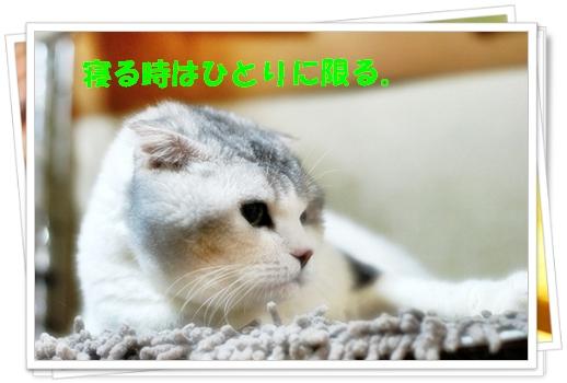 c0116921_23484310.jpg