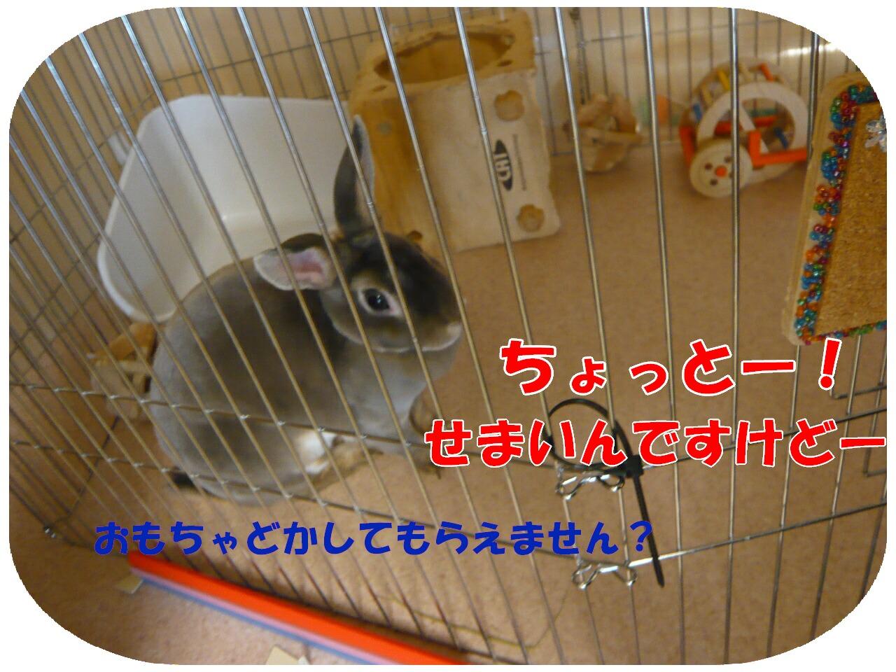 c0151439_1294060.jpg