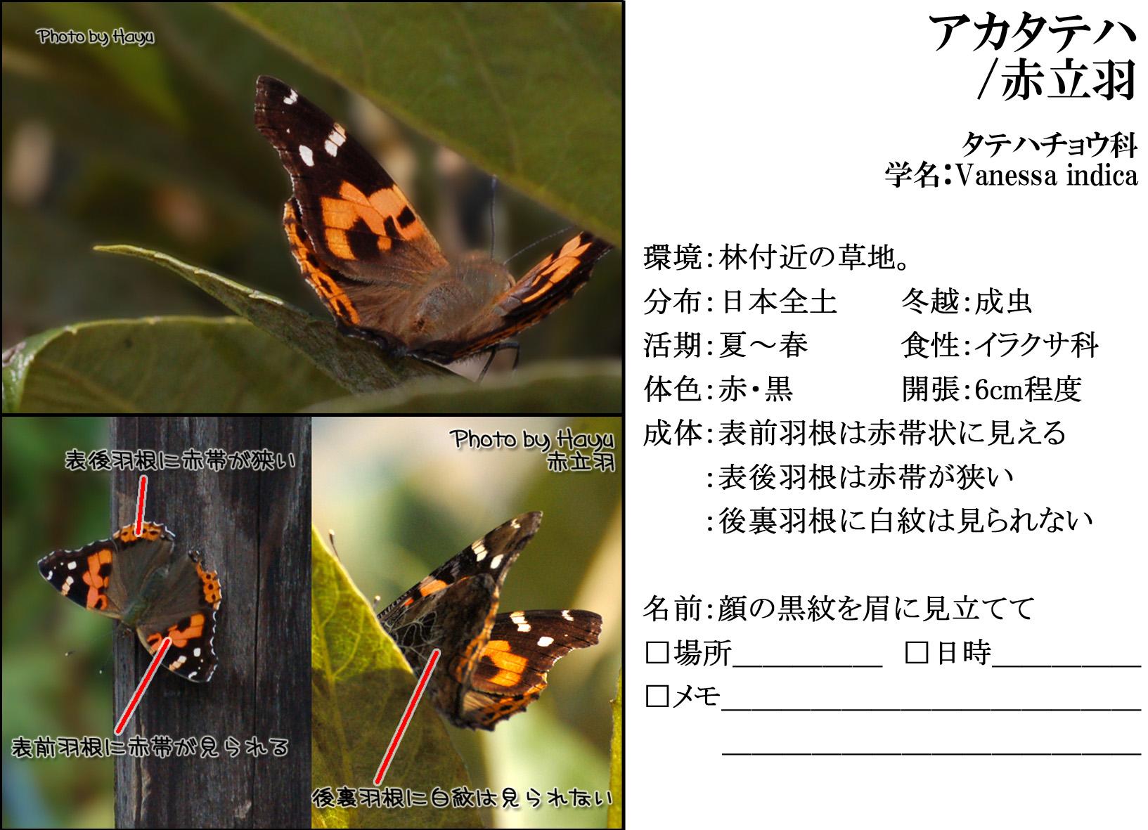 a0059328_23222292.jpg
