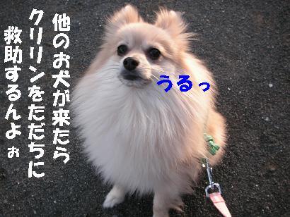 c0179136_2359110.jpg
